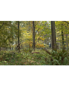 Härkila Modi Camo Cap AXIS MSP forest green